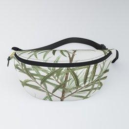 Bitter willow Salix angustifolia from Traite des Arbres et Arbustes que lon cultive en France en ple Fanny Pack