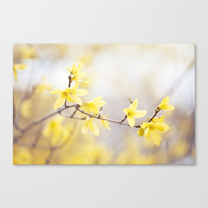 Yellow Forsythia Flower Photography Yellow Floral Spring Art