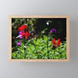 Red Crocosmia Flower Framed Mini Art Print