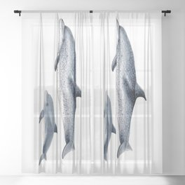 Atlantic spotted dolphin Sheer Curtain