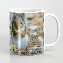 Gray squirrel stood upright eating a nut Coffee Mug