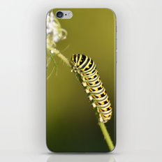 Catapillar on Queen Anns Lace - An Art Print iPhone & iPod Skin