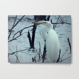 Great Egret White Bird Blue Water A107 Metal Print