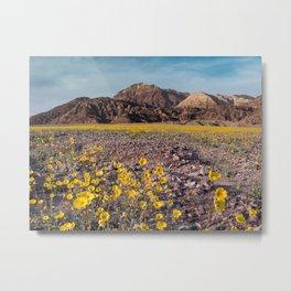 Desert Sunflowers in a Death Valley Super Bloom Metal Print
