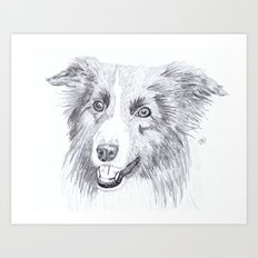 Border Collie Sketch Art Print