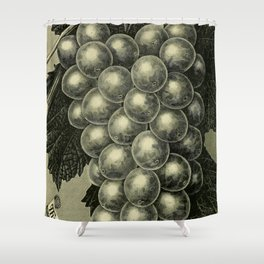 OUR NATIVE GRAPE. THE GENEVA 1893 Shower Curtain