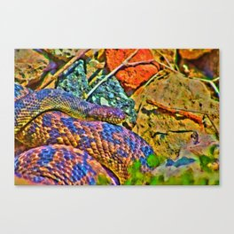 Colorful Snake Canvas Print