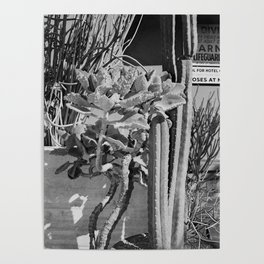 Cacti Poolside Poster