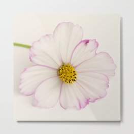 Sensation Cosmos Single Bloom Metal Print