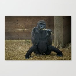 Gorilla Lope Canvas Print