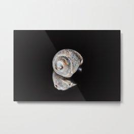 Broken Sea Shell Metal Print