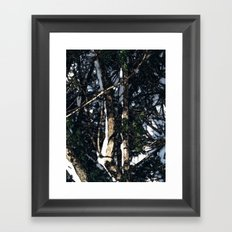 Snow Tree Framed Art Print