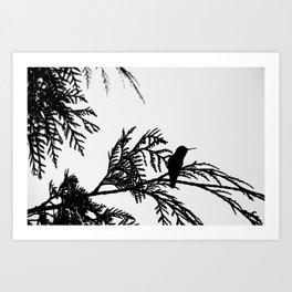 the thoughtful hummingbird Art Print