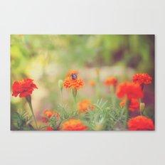Summer Bee Canvas Print