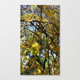 SDRV   Cottonwood Canvas Print