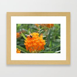 Orange on Orange  Framed Art Print
