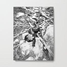 Oskar the Mountain salamander Metal Print
