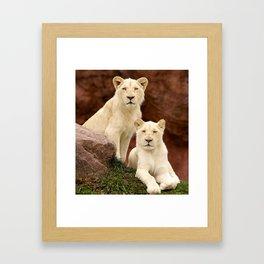 White Lion Cubs - Observing. Framed Art Print