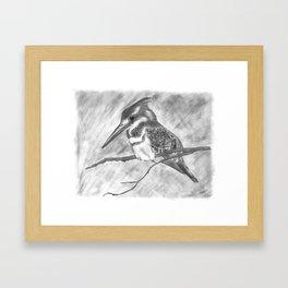 Pencil Sketch of Kuckabura  Framed Art Print