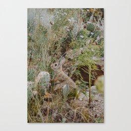 Spooked Desert Bunny Canvas Print