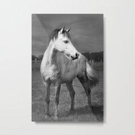 Storm Horse Metal Print