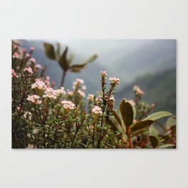 Mountain Flowers // Great Smoky Mountains Canvas Print