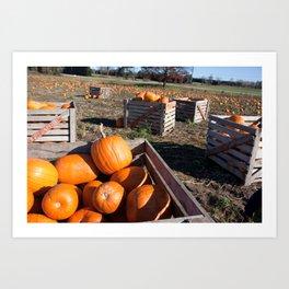 Crate of Pumpkins Art Print