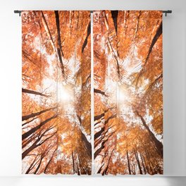 low angle view of a tree  Blackout Curtain