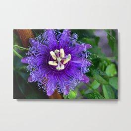 Pasion Fruit -Purple Flower Metal Print
