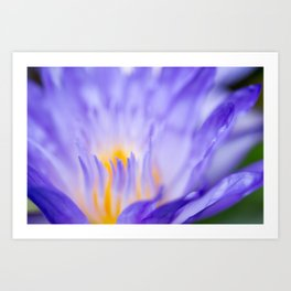 Star Of Siam Water Lily Photograph by Priya Ghose Art Print