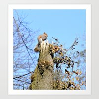 Grey Squirrel Art Print