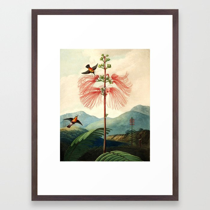 Large flowering sensitive plant. Framed Art Print by purelove | Society6