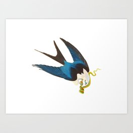 Swallow-tailed Hawk Art Print
