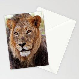 Big lion - Africa wildlife Stationery Cards