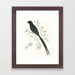 Black Winged Bird of Paradise Framed Art Print