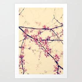 almost bloomed Art Print