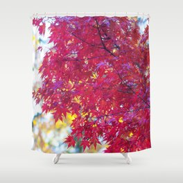 Maple in the Fall Shower Curtain