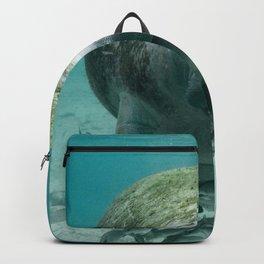 USA Photography - Miami Stray Seal Backpack