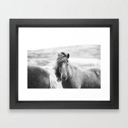 Horse Photograph in Iceland Framed Art Print
