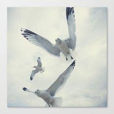 Seagull {Three} Canvas Print