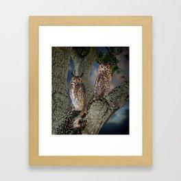 Great horned owl pair Framed Art Print