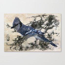 elegant christmas winter snow bird pine tree nature landscape blue jay Canvas Print