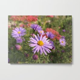 Pink Asters Metal Print