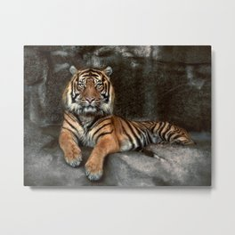 in the eyes of the tiger Metal Print