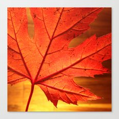 maple leaf - square Canvas Print