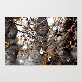 Love Is Dead Canvas Print