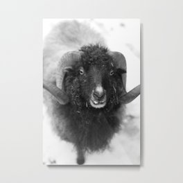 The black sheep, black and white photography Metal Print