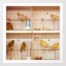 Marche Aux Oiseaux 2 Art Print