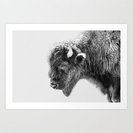 Animal Photography | Bison Portrait | Black and White | Minimalism Art Print