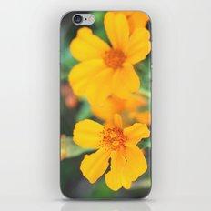 orange flowers. iPhone & iPod Skin